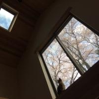 春のお便り170421