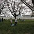 桜見納めは水沢競馬場へ