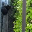 黒猫のタンゴ