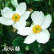 京王アンジェの花たち