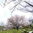 3/14_春うらら~~