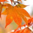 紅葉。。。!