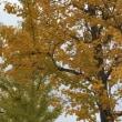 ★人に優しい街路樹。「休」という字の意味はご存知ですか?