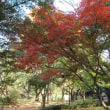 ・ 泉の森・ふれあいの森 紅葉~黄葉が進んでいます 2017