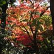 錦秋~宇治市植物公園の11月 (1)