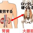腎臓と腰痛と大腰筋           金沢市   整体