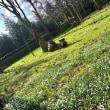 寒さはまだまだ厳しい、春が待たれる2月の末、空き地にすでに咲きはじめている春の花