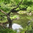 ハシビロコウが一匹死んじまったのだ・追悼旅なのだ!(旧古河庭園つき)。