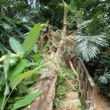 KLタワーでつり橋Taman Eko Rimba KL