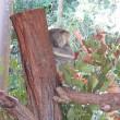 ♪♪ 夏休みの思い出18 コアラ