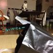 猫は袋が好きでね