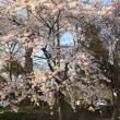 桜づくし2 中根子延命寺地蔵堂