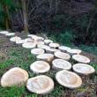 風害木処理