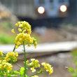 渥美線と菜の花、其の二