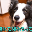 WAN-WA杯ご参加ご希望の皆様へ、お知らせ(^_-)-☆