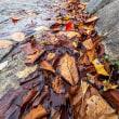 初冬の都賀川河川
