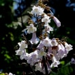 山柿の花やヤマボウシ