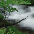 雨の信州 渓流撮り2