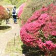 小田急山のホテルの庭園その4    投稿者:佐渡の翼