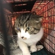 飼い主のいない猫さんの去勢手術2匹済ませました