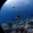 3連休は日本海へ!白浜OW&FUN&体験ダイブへいっちきます!