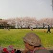 大治郎と花見