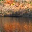 12月8日  晩秋の沼