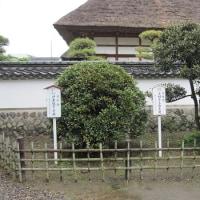 足利学校孔子廟にある提督手植えの月桂樹