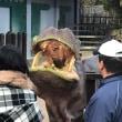 カンガルー、ライオン、鹿、インコさんたち、カバのお食事と私のお食事