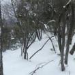 京都北山 天ヶ岳に登る
