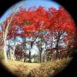 ロゼ裏の紅葉 2017.11.27
