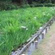 菖蒲園の今