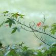 立冬の宇治川