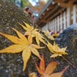 多賀大社と彦根城