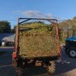 札幌のデントコーン収穫開始