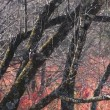 17年11/17~木曽馬の里~冬の野鳥~①