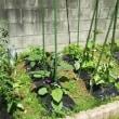 野菜の花……