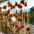 1週間後の干し柿