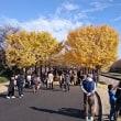 秋の終わり 【立川市で女性先生による産後骨盤矯正 立川ヒロ整骨院】