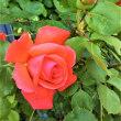 バラの花束には意味があります(⋈◍>◡<◍)。✧♡