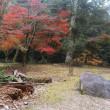宮島の紅葉は「もうちょっと」かね~~