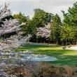 桜は見事だが、スコアは散々