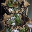 フックドプランツ[休日][植物]