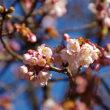 新宿御苑に蝋梅を見に行ってきました。