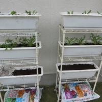 鍋野菜を育てる!
