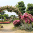 一本木公園のバラ園