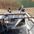 錦川漁協様の河川放流をさせていただきました