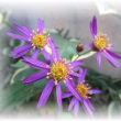 季節外れの花