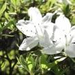 ゴールデンウィークに咲いている花
