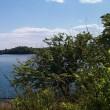 庭先ぁ~♪多摩湖~♪